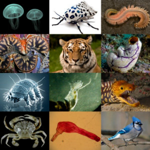 http://commons.wikimedia.org/wiki/File:Animal_diversity.png